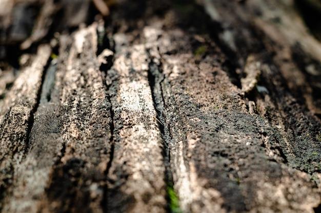 Kora drzewa makro