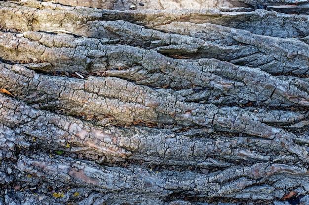 Kora drzewa. miejsce na tekst.