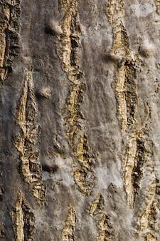Kora drzewa, pień, tekstura, pionowa