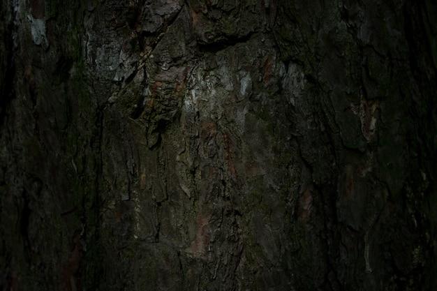 Kora drzewa tekstura natura las las tło drzewa liściaste drzewa iglaste