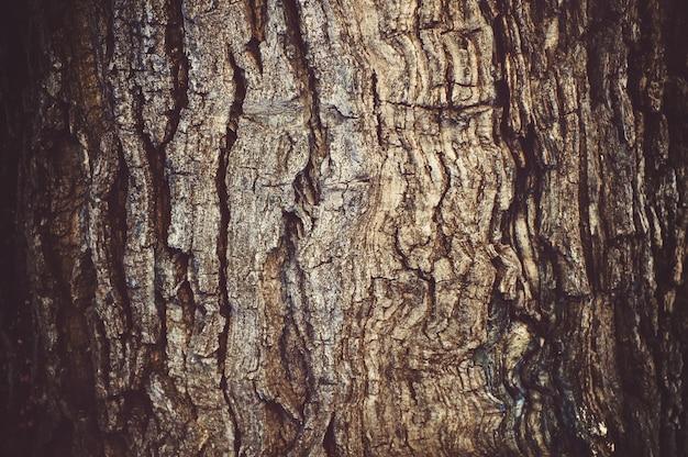 Kora drzewa tekstura tło. pień drzewa.