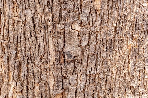 Kora drzewa tekstura tło