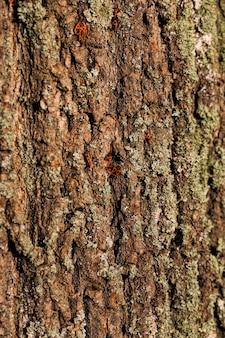 Kora drzewa tekstury