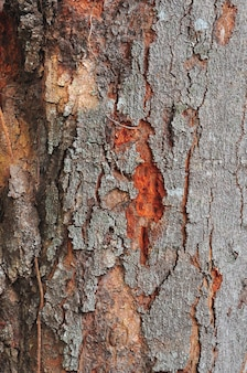 Kora drzewa w tle