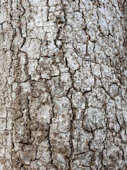 Kora drzewa z bliska tekstury