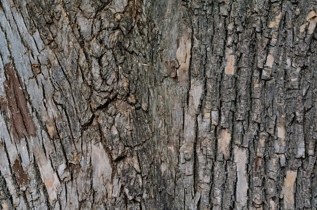 Kora na pniu starej tekstury drzewa