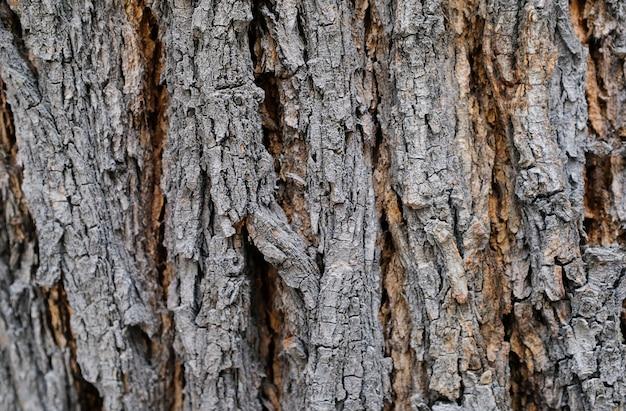 Kora starego drzewa z bliska.