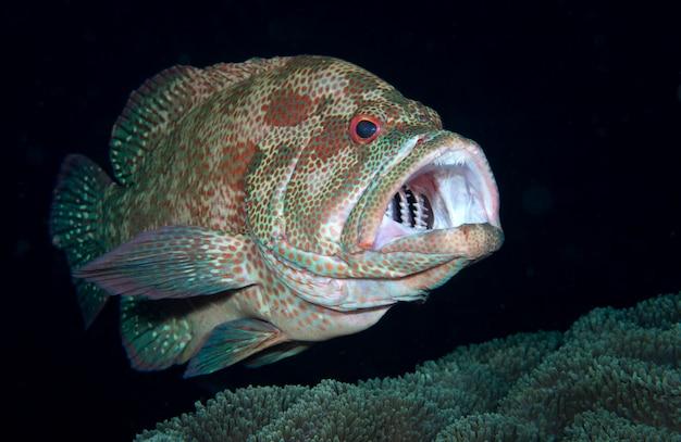 Koralowy granik na stacji czyszczącej podwodny świat bali