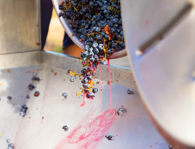 Korkociąg kruszarki destemmer winiarski z winogronami