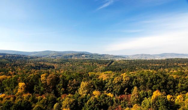 Korony drzew lasu jesienią. w tle karpaty.
