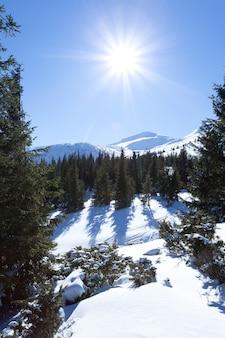 Korony drzew pokryte śniegiem w zimowym lesie w zimowy dzień z błękitnym niebem powyżej