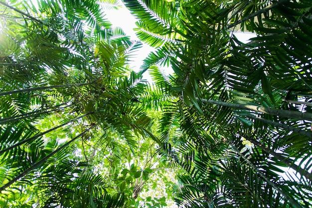 Korony drzew tropikalnych. piękne miejsce. widok drzew poniżej