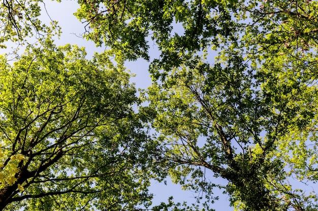 Korony drzew w nasłonecznionym lesie