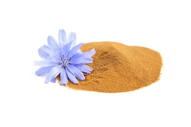 Korzeń cykorii w proszku z niebieskim kwiatem na białym tle