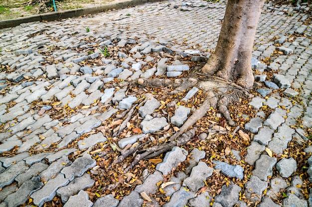 Korzeń drzewny dorośnięcie i uszkadza ceglanego bloku przejście