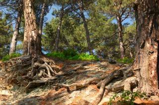 Korzeniami drzew, na wsi