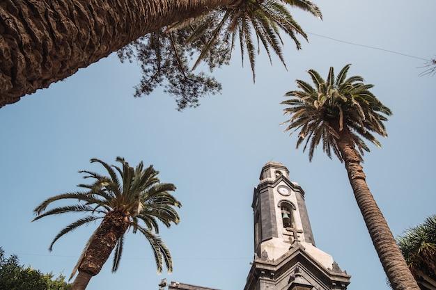Kościół otoczony palmami