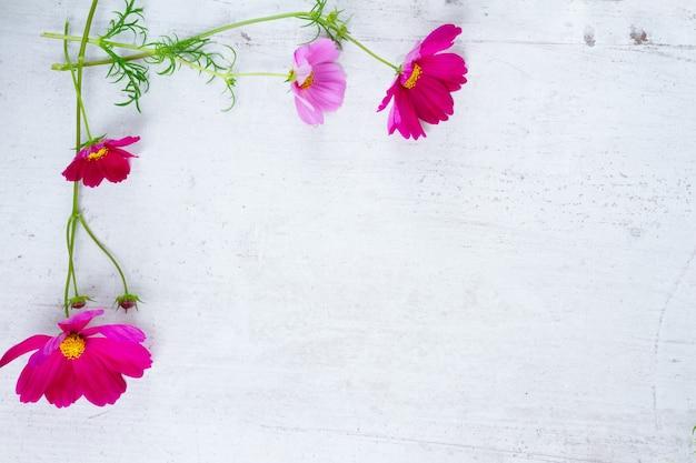Kosmos świeże kwiaty rama na białym drewnianym stole