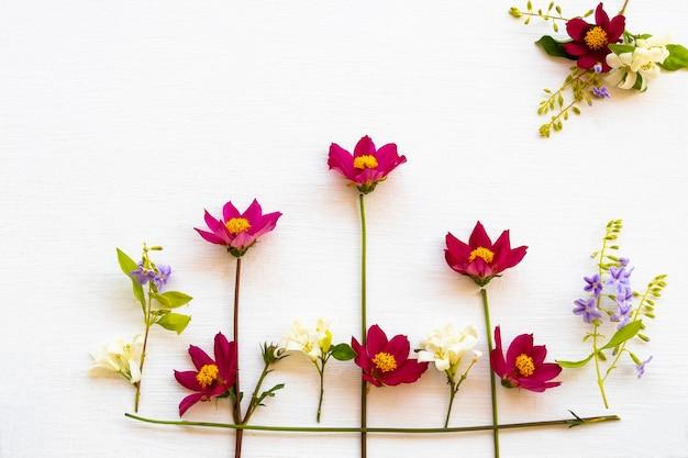 Kosmos układania kwiatów płaski leżał styl pocztówki