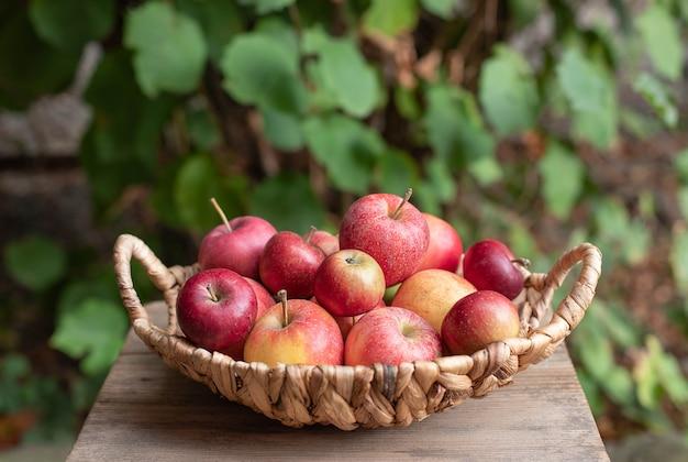 Kosz dojrzali smakowici jabłka na ogródzie