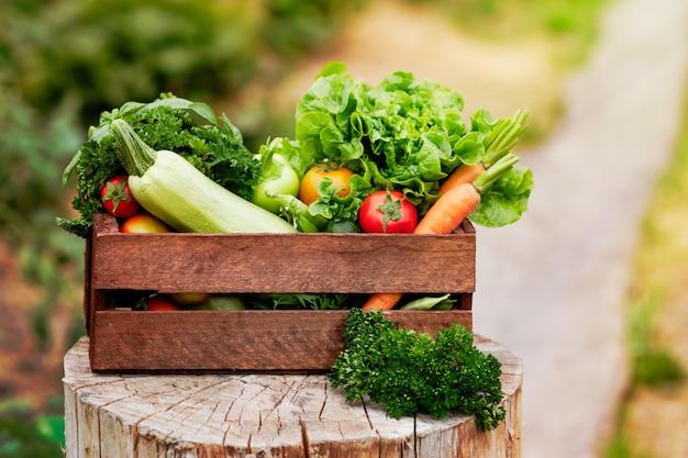 Kosz pełen organicznych warzyw i korzeni na ekologicznej farmie bio.