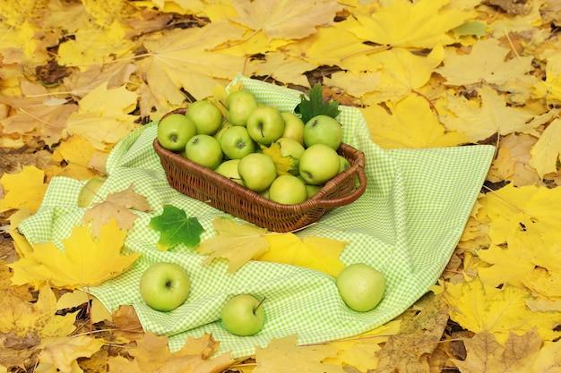 Kosz świeżych dojrzałych jabłek w ogrodzie na jesiennych liściach