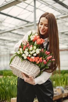 Kosz tulipanów. ogrodnik w fartuchu. dziewczyna w szklarni.