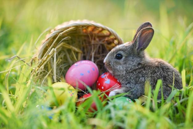 Kosz wielkanocny z brązowym królikiem i pisankami kolorowymi na łące na tle wiosennej zielonej trawy ozdobiony na święta wielkanocne - królik słodki z natury