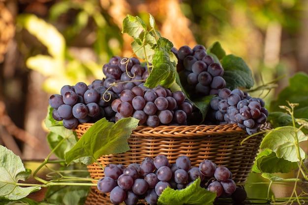 Kosz winogron i liści na ciemnej powierzchni odbijającej