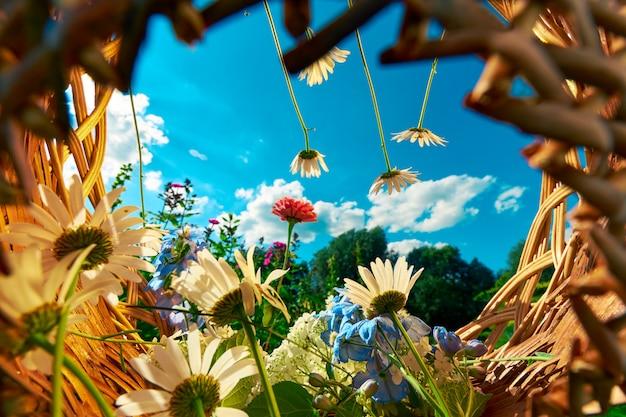 Kosz z kwiatów rumianku i hortensji na tle błękitnego nieba z chmurami