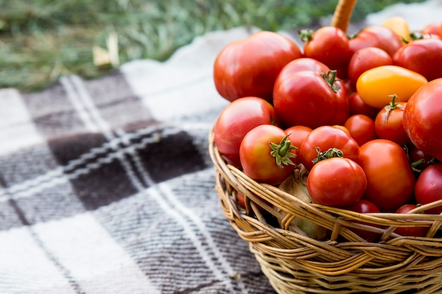 Kosz z pomidorami na kocu. świeża żywność ekologiczna z ogrodu.