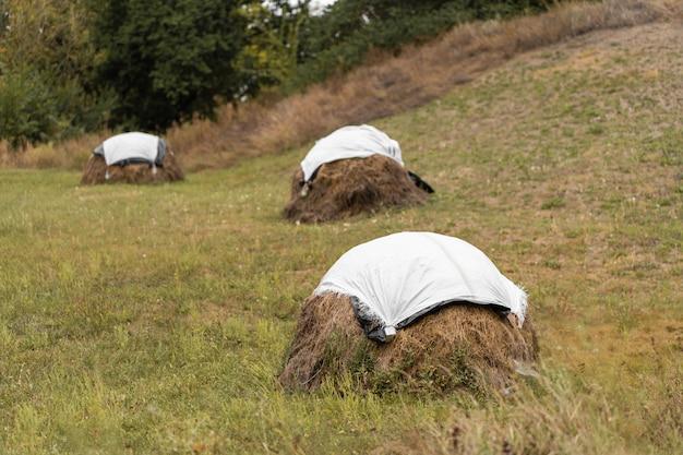 Koszona trawa na polu jest układana w stos