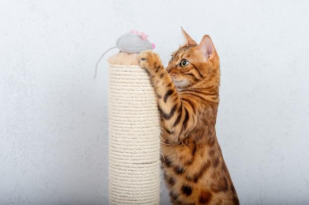 Kot bengalski bawi się szarą pluszową myszą obok drapaka