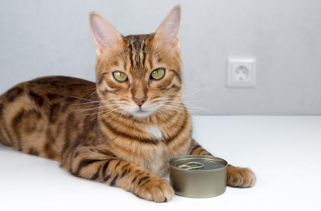 Kot bengalski i mokra karma dla kotów w zamkniętej puszce