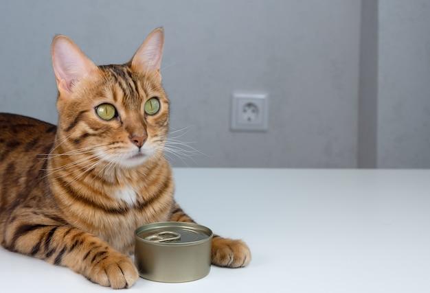 Kot bengalski i puszka, mokra karma dla kota w zamkniętej puszce