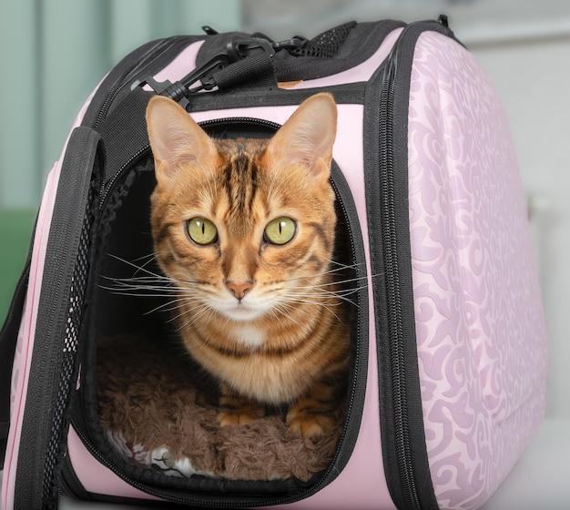 Kot bengalski i różowa torba do noszenia zwierząt domowych w pokoju