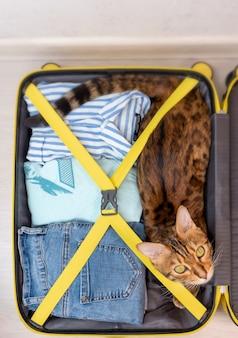 Kot bengalski leżący w walizce, zebrany na wycieczkę w pokoju, widok z góry