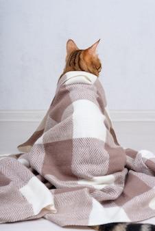 Kot bengalski okryty jest ciepłym szalikiem. widok z tyłu. ujęcie pionowe