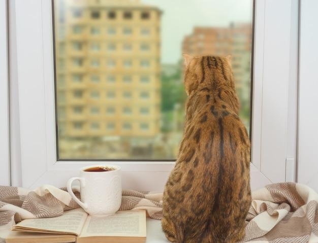 Kot bengalski siedzący przy oknie z ciepłym szalikiem, otwartą książką i filiżanką herbaty