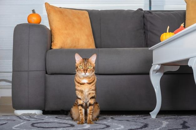 Kot bengalski siedzi na podłodze w salonie przy kanapie