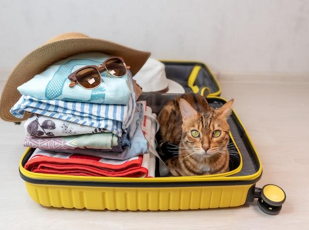Kot bengalski siedzi w żółtej walizce, zebranej na wycieczkę na wakacje nad morzem, widok z boku