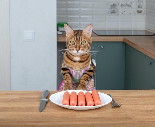 Kot bengalski w fartuchu cierpliwie czeka na jedzenie w kuchni