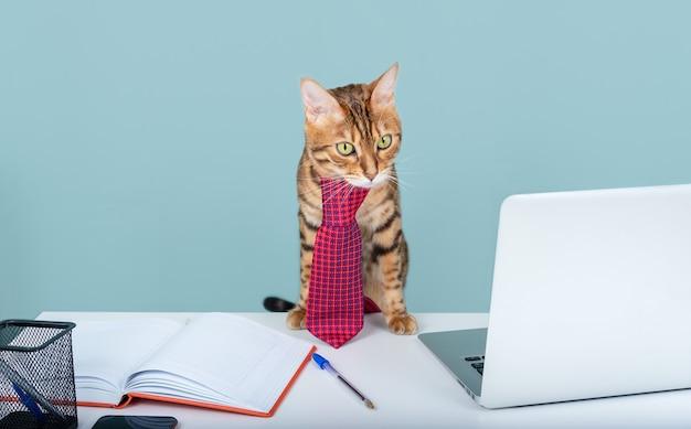 Kot bengalski w krawacie pracuje zdalnie w domowym biurze