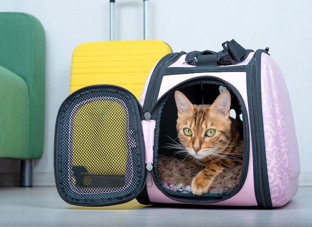 Kot bengalski w miękkim nosidełku na podłodze obok walizki w salonie