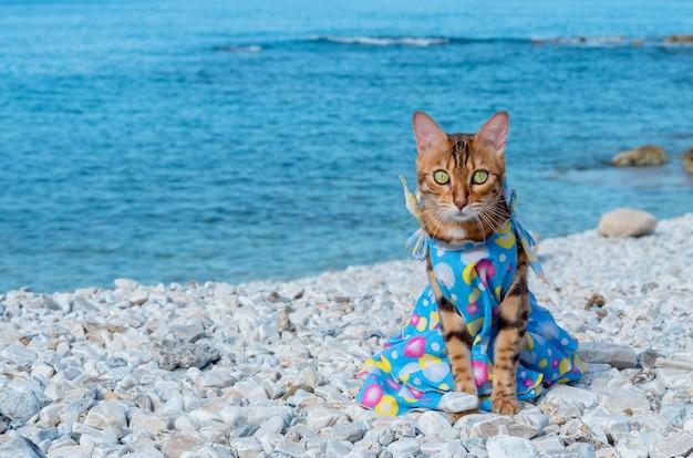 Kot bengalski w sukience siedzi na tle morza. portret kotka na tle rozmazanego morza.