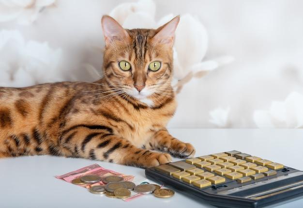 Kot bengalski z kalkulatorem, rachunkami i monetami na tle pokoju.