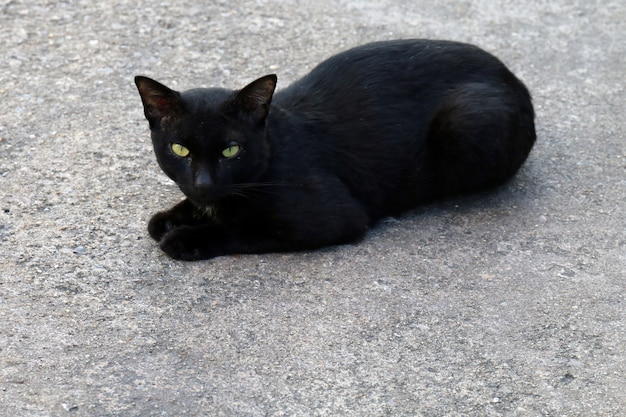 Kot, czarny kot chorowity brzydki