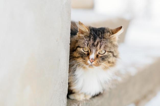 Kot czeka na mistrza na zewnątrz