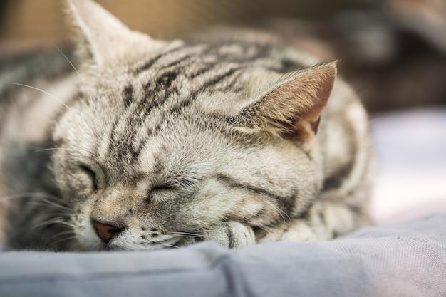 Kot czuje się zrelaksowany na dywanie