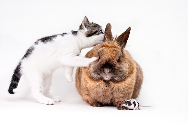 Kot domowy ciekawie patrzący w ucho królika z malutką myszką na podłodze